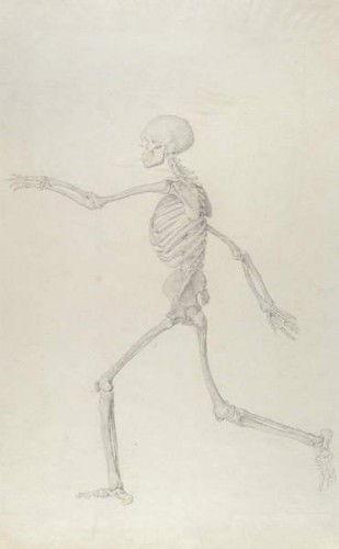 Menschliches Skelett, Seitenansicht von links gesehen, Rennen ...
