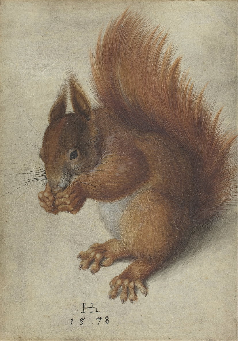 Red Squirrel von Hans Hoffmann