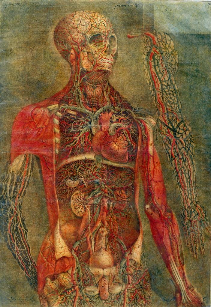 Innere Organe des Körpers, Platte von Anatomie de...