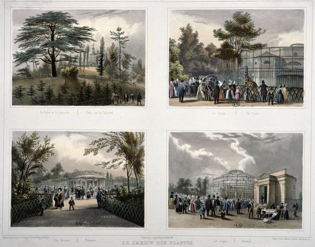 Der Jardin des Plantes in Paris: Zeder und Labyrinth, Giraffe ...
