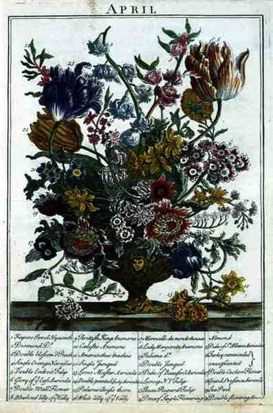 April, from The Flower Garden Displayed by Robert Furber (c.1674-1756), engraved by James Smith, pub. 1732  (see also 11109) by Pieter after Casteels